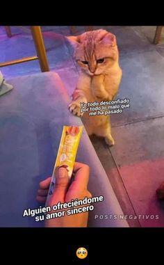 Cuando me ofrecen chocolate Memes Humor, Cat Memes, Funny Memes, Frases Tumblr, Love Words, Gaming Memes, Popular Memes, Funny Photos, Haha