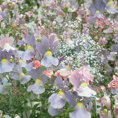 ImageFind images and videos about pink, aesthetic and nature on We Heart It - the app to get lost in what you love. Spring Aesthetic, Nature Aesthetic, Flower Aesthetic, Flower Yellow, My Flower, Arte Peculiar, No Rain, Pretty Pictures, Land Scape