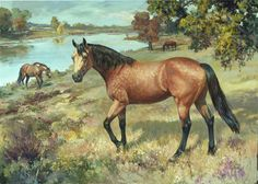 Horse Paintings By Famous Artists | horse-art-portraits-oil-painting-quarter-horses-giclee-canvas-prints ...