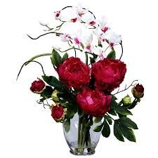 > www.scentimentsflowers.com orchid flower meaning for a special gift