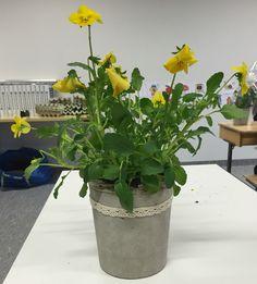 . Planter Pots