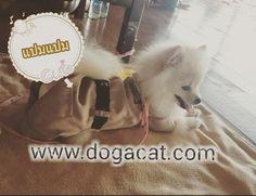 นองแปมแปม ใสเสอสนข ชดขาราชการ นารกมากๆคะ #reviewdogacat  line : dogacatthailand  www.dogacat.com FB : dogacat  Fanpage : dogacatthailand Instagram : dogacat  #dogacat #reviewdogacat #เสอผาหมา #เสอสนข #เสอหมา #เสอผาสนข #เสอแมว #เสอผาแมว #แวนตาสนข #รองเทาสนข #puppyclothes #petstagram #puppy #petclothes #petsofinstagram #dogstagram #dogoftheday #dogdress #dogdaily #dogapparel #dogclothes #dogcute  #dogshoes #doghat #chihuahua #shihtsulovers #shihtzu #shihtsugram #ปลอกคอสนข #หมวกสนข by dogacat…