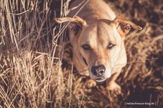 Pfotentick-Presets: Schöne Foto-Effekte mit einem Klick