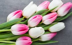 Download wallpapers pink tulips, spring flowers, bouquet of tulips, spring