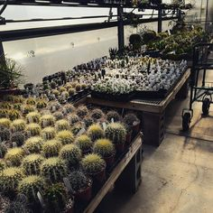 Cactus Room, Ted's Greenhouse, Tinley Park, Illinois