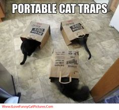 the cat was to scared to come out of the bag :) horrible puns
