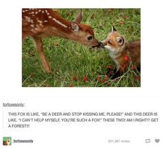 """haha, so cute! (and actually the deer looks like he/she's saying to the photographer, """"Um, do you mind? Having a moment here."""")"""