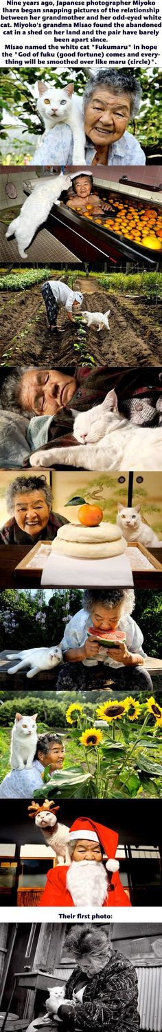 Le photographe capture la belle relation entre sa grand-mère et un chat .: