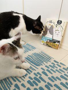 Kitty, Comics, Cats, Animals, Little Kitty, Gatos, Animales, Animaux, Kitty Cats