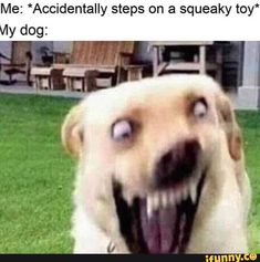 funny pictures lol , Memes - best funny pictures + funny pictures lol + good morning funny pictures + really funny pictures + happy funny pictures + very funny pictures + Super Funny Memes, Funny Dog Memes, Crazy Funny Memes, Really Funny Memes, Funny Relatable Memes, Cute Memes, Haha Funny, Funny Dogs, Stupid Memes
