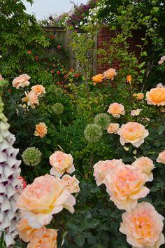 Yokohama Английский сад