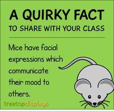 A quirky fact about mice to share with your class - from Treetop Displays. Visit our TpT store for printable resources by clicking on the provided links. Designed by teachers for Pre-Kindergarten to 7th Grade.