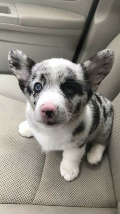 50 Adorable Baby Animals Will Surely Make Your Day Brighter FallinPets 50 Adorable Baby Animals Will Surely Make Your Day Brighter FallinPets Cute Corgi, Corgi Dog, Cute Puppies, Dogs And Puppies, Dog Cat, Welsh Corgi Puppies, Puppy Husky, Teacup Puppies, Pomeranian Puppy