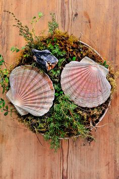Fresh scallop cooked in the shell over burning juniper branches. At Faviken Restaurant - Magnus Nilsson.