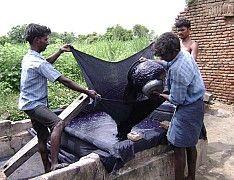 7 Straining indigo dyestuff, Tamil Nadu, India. Photo copyright Mary Lance -