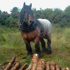 Welcome to Trojan Heavy Horses: Heavy horses in Athenry