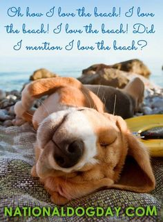 Celebrate National Dog Day (At the Beach)!