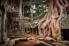 Las enormes raíces avanzan sobre los templos y sus paredes.