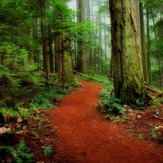 Mystical Trail Photograph by Randy Hall