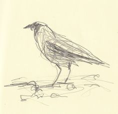 Hooded Crow by Bridget Farmer.