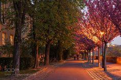 Spring Evening Castle Hill Budapest by csillogo11