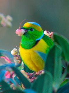.The colors are brilliant