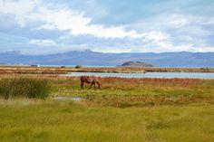 Reserva Natural Laguna Nimez - El Calafate - Santa Cruz - Argentina