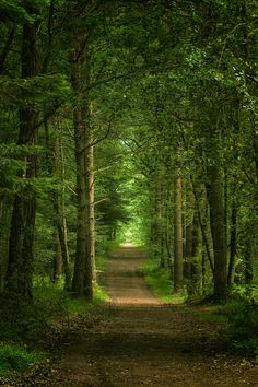 Image discovered by ✧ Silvaris ✧. Find images and videos about nature, forest and woodland on We Heart It - the app to get lost in what you love. Forest Path, Forest Road, Tree Forest, Beautiful Forest, Beautiful Places, Landscape Photography, Nature Photography, Walk In The Woods, Nature Pictures