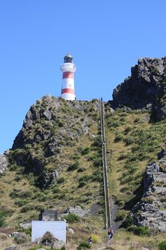 Cape Palliser Bay Lighthouse. 240 steps to an incredible view.