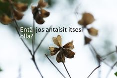 Entä jos antaisit itsesi olla? Seriously Funny, Thinking Of You, Content, Sayings, Namaste, Poetry, Deep, Life, Quotes