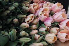 #fiveforkfarms #tulipmania #sweetlove #tulips #MAgrown #shoplocal