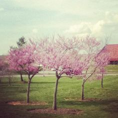 the places you never notice, until it's summer and you can no longer pass them by every day. i don't wanna graduate.