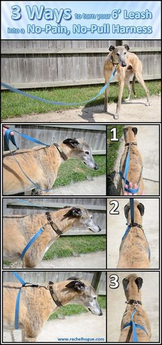 View full size here. I've found that a plain ol' leash makes a better training tool than any of the harnesses or haltis on the market. No need to spend money if you already have what you need! 3 Ways to turn your 6' Leash into a No-Pain, No-Pull Harness 1) Drape the excess leash below the dog's chest in front of the legs. 2) Loop the leash under the chest and up through the collar. 3) Loop the leash under the dog's chest and back up over itself. Happy Walking!! Featured Dog: My greyhound...