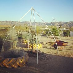 Janet and Eddie protect their fruit trees from birds with a PVC pyramid frame. Janet and Eddie Bird Netting, Garden Netting, Garden Trellis, Fruit Garden, Vegetable Garden, Permaculture, Aqua Farm, Fruit Cage, Peach Trees