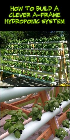 An A-frame hydroponic system lets you grow at least twice the amount of plants from a regular garden bed. This exact structure you see above accommodates 168 plants in just a x space. farming aquaponics system Build an Efficient A-Frame Hydroponic System! Aquaponics System, Hydroponic Farming, Hydroponic Growing, Aquaponics Diy, Aquaponics Greenhouse, Hydroponic Vegetables, Hydroponic Grow Systems, Vertical Hydroponics, Vertical Farming