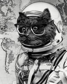 """Space kitten"" my #collage. Get a signed print at the link on my bio. #collageart #kitten #cats #astronaut #nasa #psychedelic #glasses #earth by eugenia_loli"