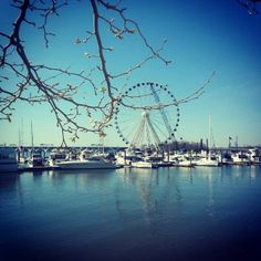 A spin on the National Harbor's new Capital Wheel should be a must on your family bucket list. Here's why.