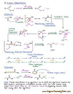 Fischer esterification Chemistry Class 12, Organic Chemistry Tutor, Organic Chemistry Reactions, Chemistry Basics, Chemistry Study Guide, Chemistry Classroom, Teaching Chemistry, Chemistry Lessons, Science Chemistry