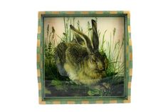 12x12 small tray - Rabbit