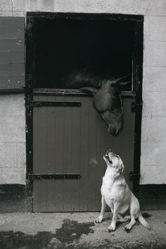 From Ireland Ever - The Photographs of Jill Freedman
