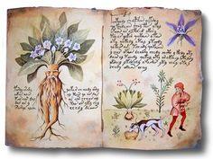 As ervas e as influências dos astros | SENHORA NATUREZA – Portal de Ervas Medicinais, Especiarias, Plantas Medicinais, Alimentação e Vida Saudável – Orgânicos e Biodinâmicos -