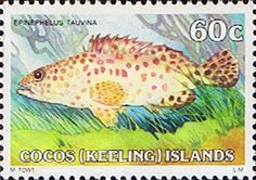 Cocos Keeling Islands 1979 Fishes SG 45a Greasy Grouper Fine Mint Scott 48 Other Cocos Keeling Island Stamps HERE