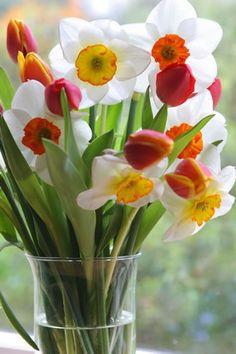 Spring in a vase!