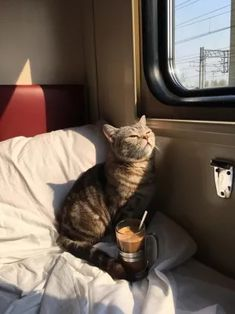 """Expressiveness and curiosity from the planet """"Cat"""" - cats - Katzen, Animals And Pets, Baby Animals, Funny Animals, Cute Animals, Cute Cats And Kittens, Kittens Cutest, Ragdoll Kittens, Tabby Cats, Bengal Cats"""