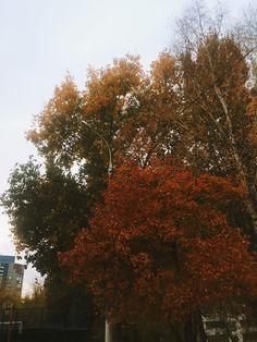 Природа в городе Autumn, World, Plants, Fall, Planters, Plant, Planting, Peace, The World