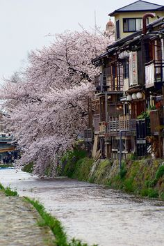 Spring in Kamo River, Kyoto, Japan