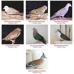 Rare Exotic Doves