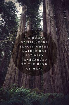 quote. nature.