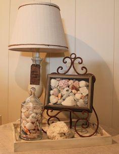 Seashell display ideas