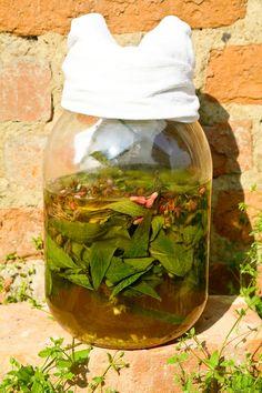 Cucumber, Herbalism, Herbs, Audi A6, Food, Diet, Herbal Medicine, Essen, Herb